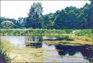 Jeden ze stawów na terenie Śląskiej Strefy Krajobrazowo-Rekreacyjnej (Mikołów)
