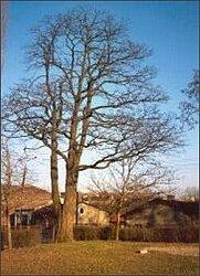 Opowieści starego drzewa - Tomasz Fudała