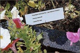 Niewielka kartka pozostawiona na nagrobku - cytatt z wiersza Agnieszki Osieckiej drukowanego w ostatnim   numerze 'Kultury'