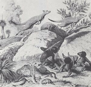 sceny myśliwskie z Australii