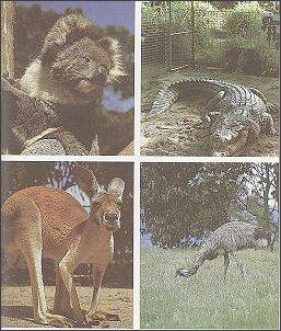 """Zwierzęta Australii (ilustracja z niemieckiego wydania """"Lądu, który przestał być plotką"""", Leipzig 1987)"""