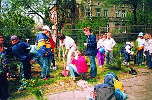 Szkoła Nr 6 na Wawelu - sadzenie krzewów