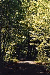 Park przy Górnośląskim Centrum Rehabilitacji