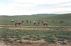 Bezkresny step i zwierzęta dające<br>ludziom szansę przeżycia - oto typowy mongolski krajobraz