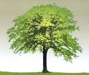 Drzewo - uniwersalny symbol kultury. (O oprawę graficzną konferencyjnych druków zadbał katowicki plastyk Czesław Romanowski.)