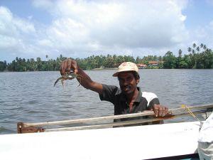Mocarny krab i jego właściciel