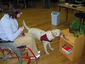 Pokaz umiejętności psa serwisowego
