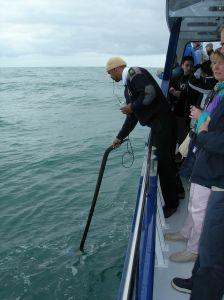 Kapitan sonarem nasłuchuje, gdzie znajdują się wieloryby
