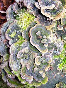 Mozaika mikrosiedlisk. Magdalena Maślak 'Martwe drzewa – żywy las'